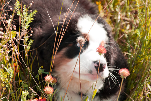 Welcome to Our Blog for Pet Sitters!