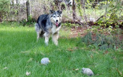 Older Dogs – Giving Them Quality Pet Sits