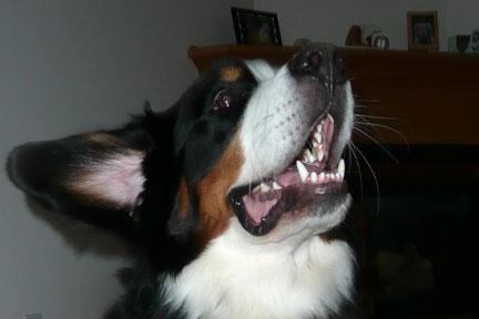 Pet Dental Health Brush-Up – Part One
