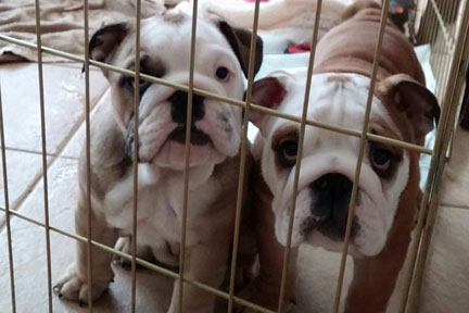 Puppy Potty Breaks…Yes or No for Your Business?
