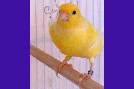 What My Canary Taught Me